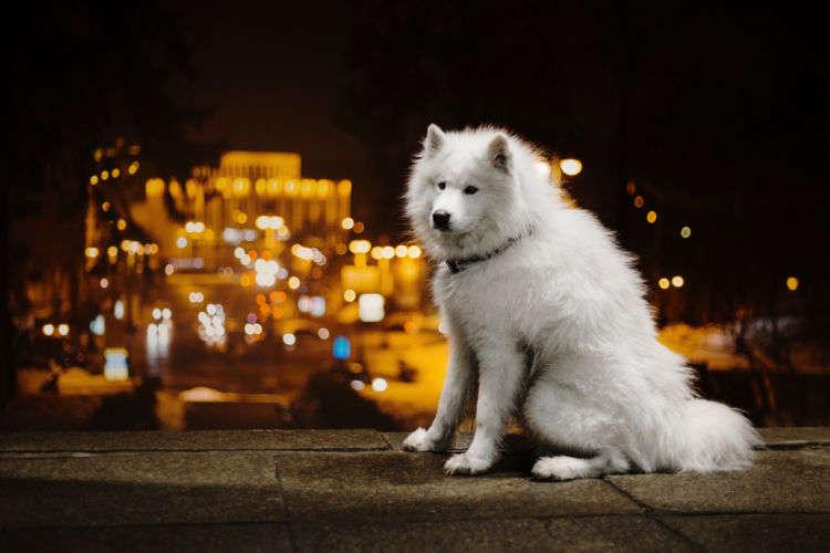 愛犬の【夜のお散歩】で注意したいこと4選!安全で楽しい時間を過ごそう