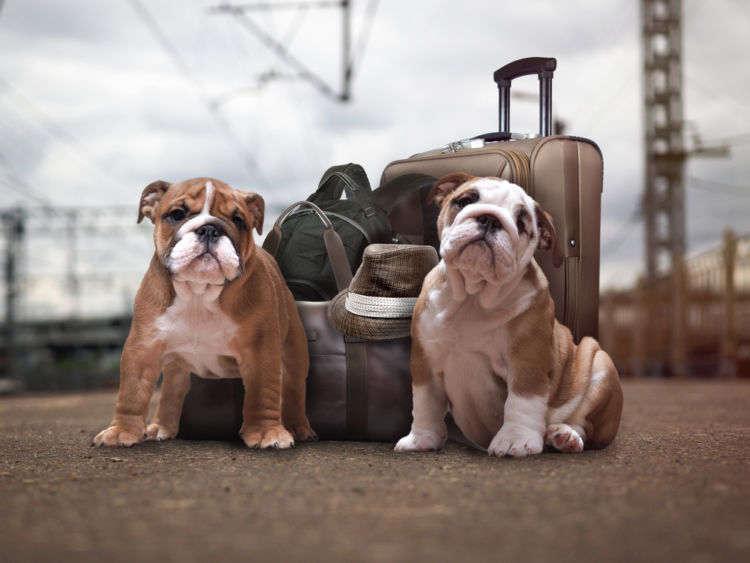外泊に慣れていない愛犬の旅行中のストレスを軽減してあげる方法