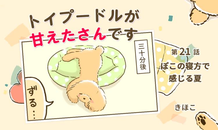 【まんが】第21話:【ぽこの寝方で感じる夏】まんが描き下ろし連載♪トイプードルが甘えたさんです