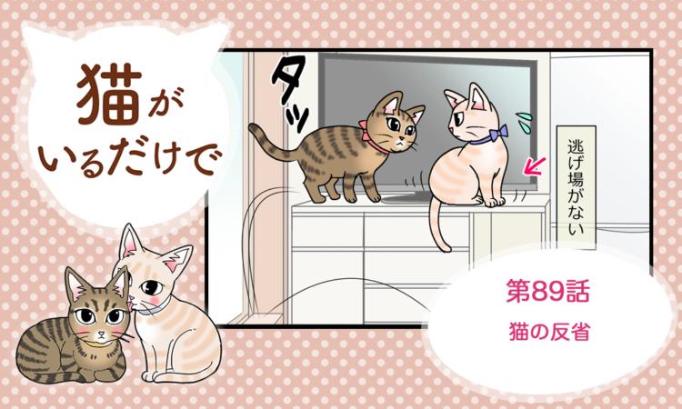 第89話:猫の反省