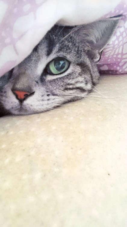 丸山さんの愛猫・そら