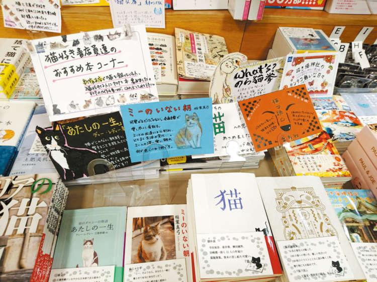 フェアでは、1冊ずつ書店員さんたちの猫愛あふれるコメントが添えられていました