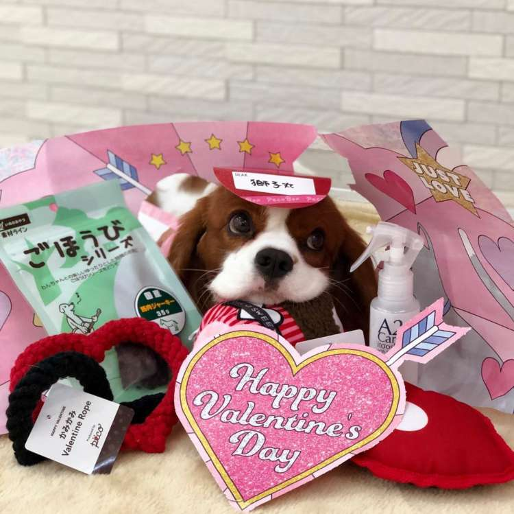 PECOBOX(ペコボックス) 2月号 バレンタイン