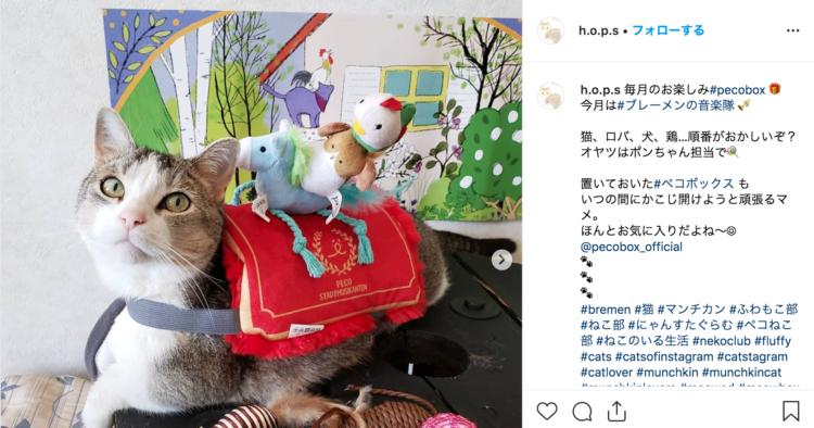 PECOBOX(ペコボックス)愛猫用の口コミ、評判