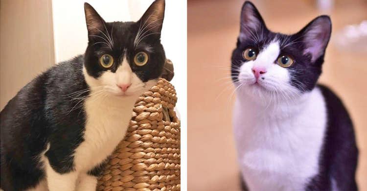 ハチワレ猫たちが勢揃いっ♪ 個性あふれる「八の字」から目が離せなくなる写真集〜(∩´∀`)∩(8枚)