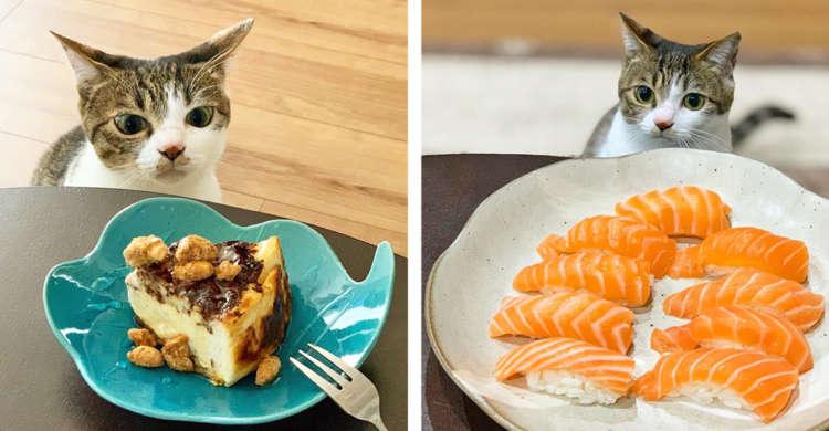 テーブル上の食べ物が気になって仕方がないニャンコさん! 何度も何度もあつ〜い視線をそそいでくるっ♪