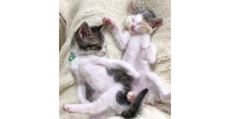 おててや足が不思議に広がっちゃった子猫たち♡ まるで踊っているかのような寝相がたまらなく可愛い♪
