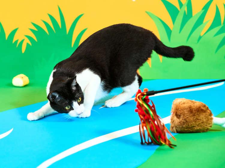 【愛猫用】PECOBOX(ペコボックス) 『バーベキュー号』受付開始! 愛猫のプレゼントの中身を解説
