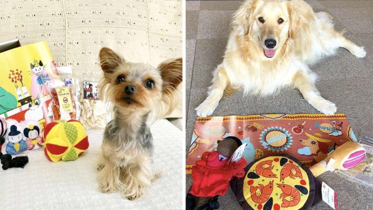 PECOBOX(ペコボックス)は超小型犬から大型犬まで使える? よくある質問に回答します! #3