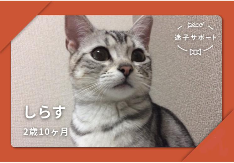 PECO迷子サポート会員証 猫