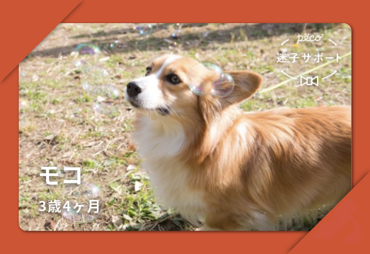 PECO迷子サポート会員証 犬