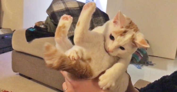 「この動くモノなにかニャ…」自分のしっぽだと気づかず、一生懸命にバトルする子猫が微笑ましかった♡