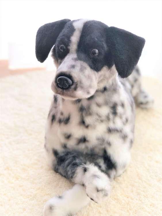 犬 ぬいぐるみ ダルメシアン オーダーメイド ミックス犬
