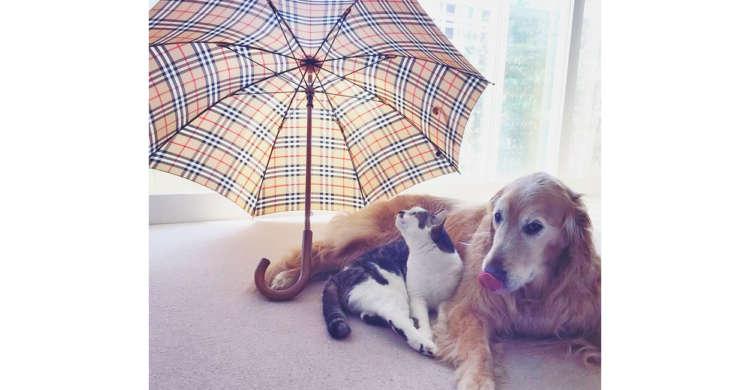 【ワンニャンの相合い傘♡】恋人同士のように体を寄せあい、傘に入る2匹にほっこりする…(*´ω`*)
