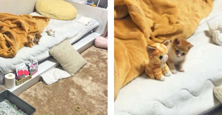 """【寄り添う""""2匹""""♪】ひとりで寂しそうな子猫に、ぬいぐるみをプレゼントした結果…(。>﹏<。)"""