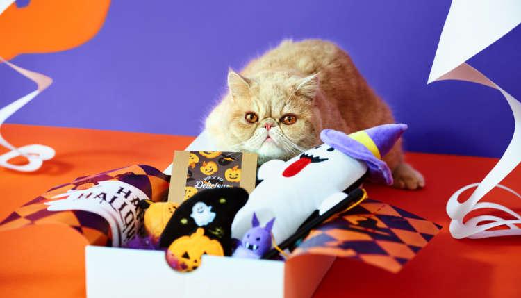 【愛猫用】PECOBOX(ペコボックス) 『ハロウィン特別号』受付開始!愛猫のプレゼントの中身を解説