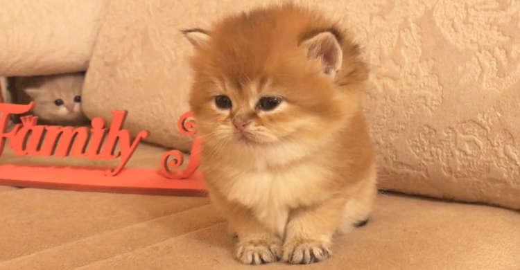 眠気にたえきれずウトウトする子猫。その後ろには、モソモソと動く小さなハンターの影が…(ΦωΦ)!