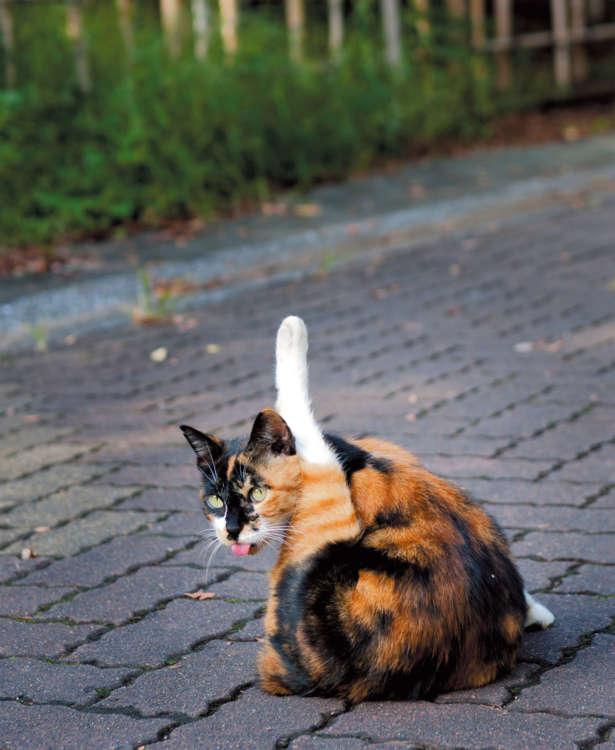話しかけると猫との絆が深まる?