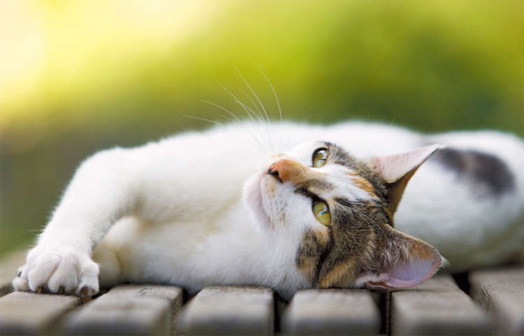 【特集 猫の最前線】最新猫研究② 猫も思い出を持っている?