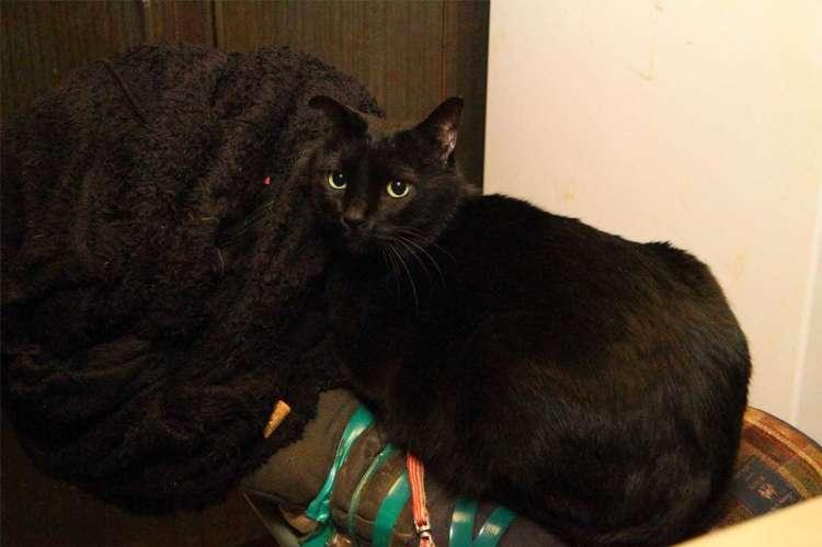 秘密基地のような黒猫のいるBARです