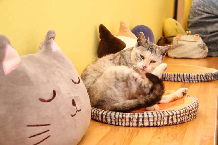 お客様のお食事中は猫クッションの間で毛繕い