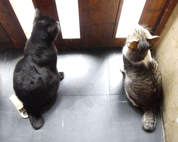 ドアが開くのを待つリンリンちゃんと麻辣ちゃん