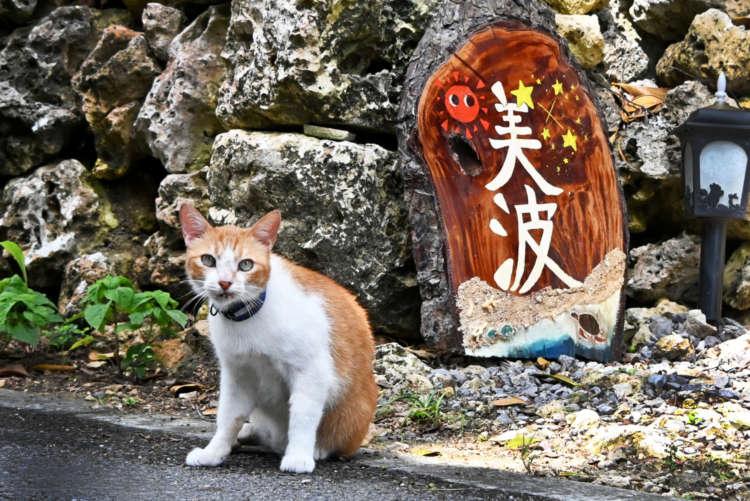 日本最南端・南十字星輝く島の看板猫【波照間島】