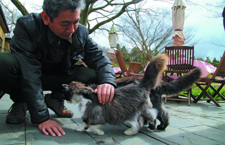 猫たちの歓待にお客さんも感激