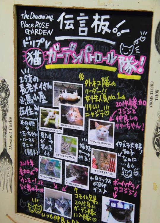 猫の紹介看板が嬉しい。今日はどのコと会えるかな?