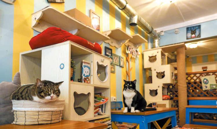 手作り感に溢れたファンシーな空間で寛ぐ猫たち