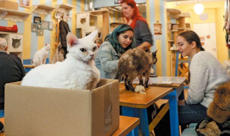 猫ファーストな猫カフェ「猫が幸せなら人も幸せ」 ~パリ15区~【from France】