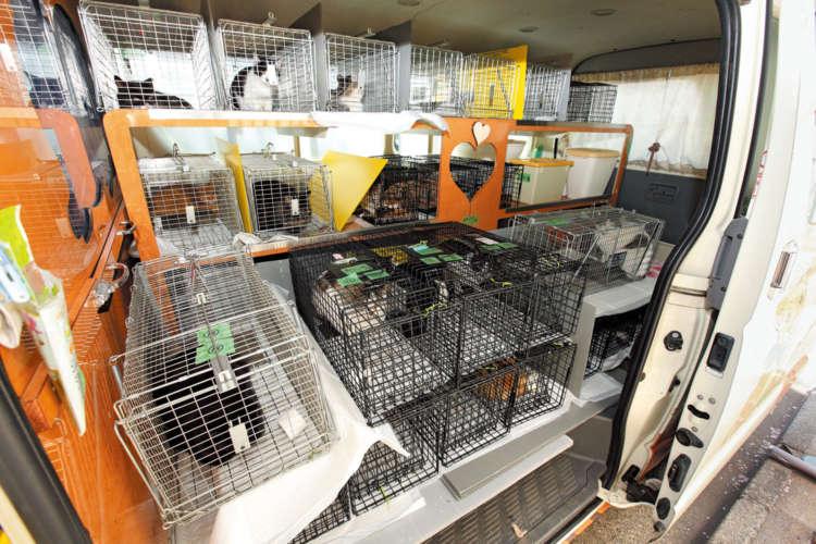 この日手術を受ける28頭の猫たちがズラリ