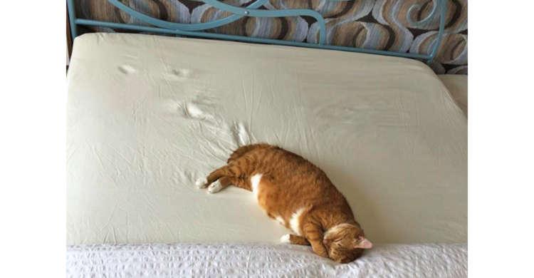「もうダメ… にゃ」マットレスの上で力尽きてしまった猫さん! 残った足跡がすべてを物語っていた(笑)