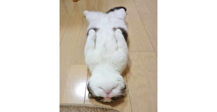 床を見ると…もふもふっ子が落ちていた♪ 思わず拾いたくなる可愛いさが話題に(∩´∀`)∩(4枚)