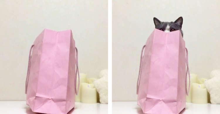 名前を呼ばれると → 顔半分だけがひょこっ♪ 紙袋に入った猫さんの「お返事」が可愛らしかった♡