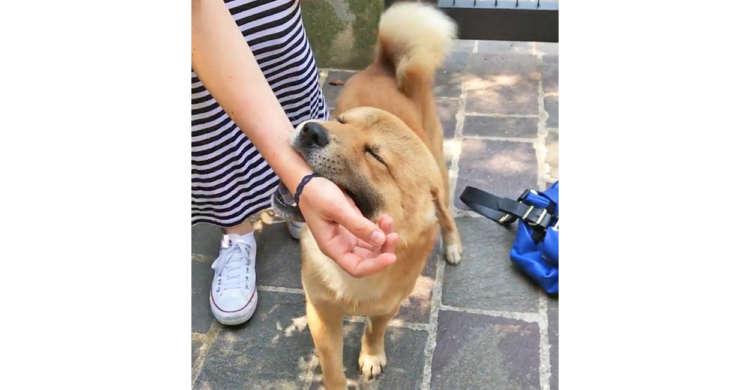 女性の手をパクっとくわえ、お家へご案内する柴犬。優しいエスコートに笑みがこぼれる(о´∀`о)25秒