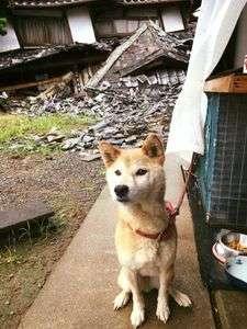 【熊本地震発生時】被災地で撮影された犬の様子