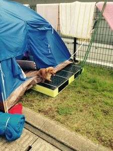 【熊本地震発生時】テント生活を余儀なくされた犬も