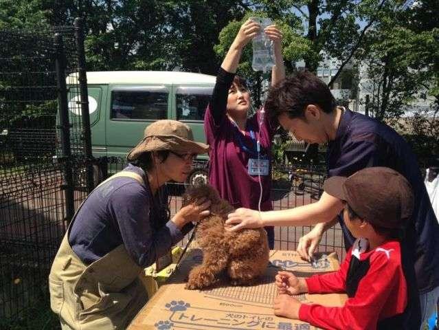 【熊本地震発生時】ボランティアの獣医師による診察も行われた