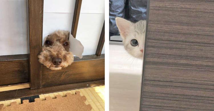 【ペットたちは見たっ】部屋の中から視線を感じる…!? キュートな覗き魔さんたちが大集合♪(10枚)