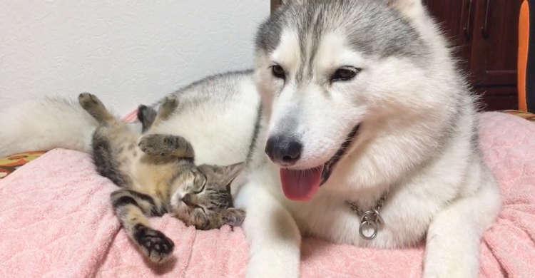 最初はすれ違いがあった子猫とワンコ → 心の距離が縮まりくっつき合う姿に、ほっこりする♪(30秒)