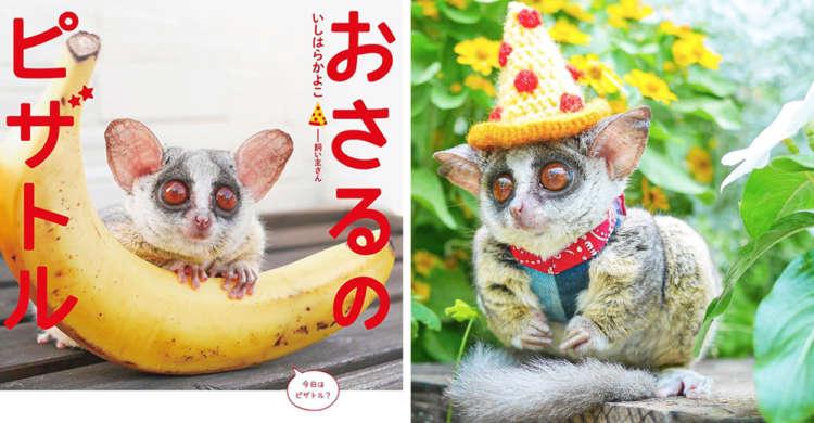 癒やしの波がドドドっとやってくる! SNSで大人気のお猿さん、「ピザトル」くんの写真集がついに発売♡