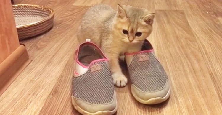 気になる靴を見つけ、サイズやにおいを入念にチェックする猫さん♪ その結果は…(/ω・\)? 40秒