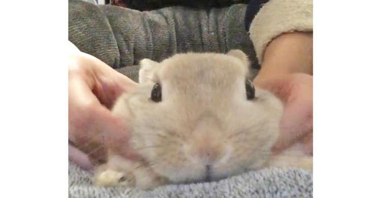 ほっぺや耳をもにゅもにゅされて…うっとり♡ マッサージを受けるウサギさんが、たまらなく可愛かった!