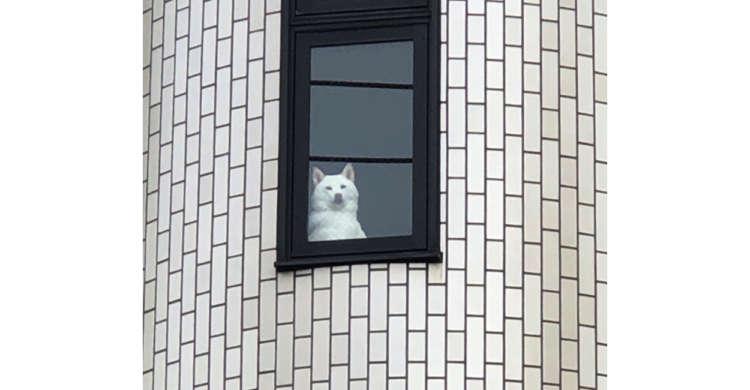 朝ごはんを買いに行く飼い主さんを、ジッと監視するワンコ! 何かを期待しているかのような様子が…(笑)
