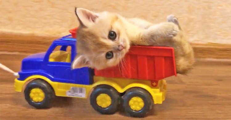 乗り物はおもちゃの車♪ 気持ちよ〜くお部屋のドライブを楽しむ子猫ちゃんが、かわいすぎた(。>﹏<。)