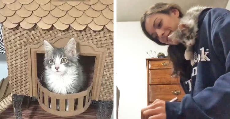 ママと子猫が、協力してダンボールハウス作りに挑戦☆ ほんわかな共同作業になごむ75秒(*´∀`)