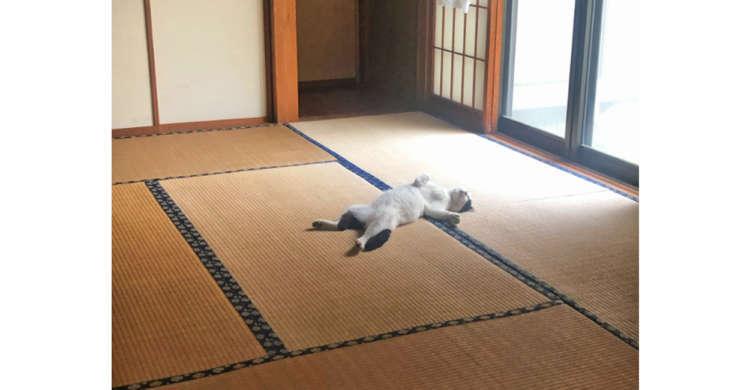 【くつろぎすぎィっ】外は雨がザーザー! → よく顔を出す外猫を、家に入れてあげた結果…(笑)