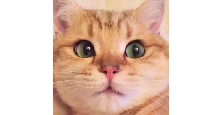 キュ〜ンと吸い込まれそうになるニャンコの瞳! ガラス玉のような透明感に見惚れてしまう41秒♪