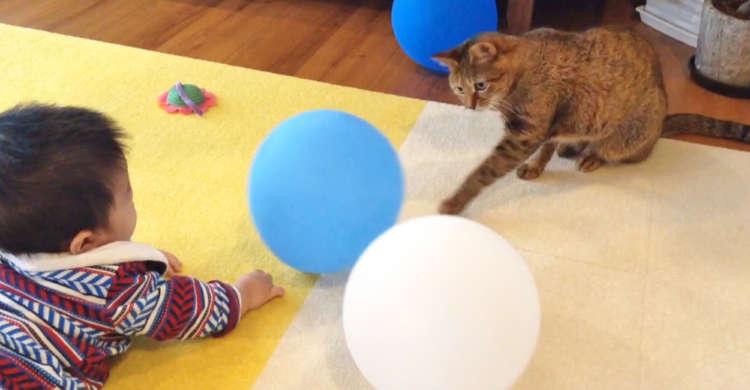 風船をぽ〜んぽ〜んと投げ返しあう赤ちゃんとニャンコ。ゆる〜く遊ぶふたりの姿にほっこり(*´ェ`*)